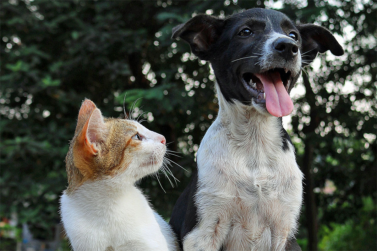 die unterschiede zwischen katzen und hundefutter