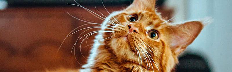 Katzenfutter-Rind