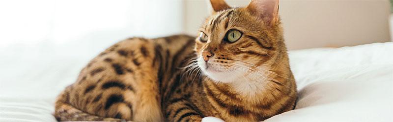 Katzenfutter-Gefluegel