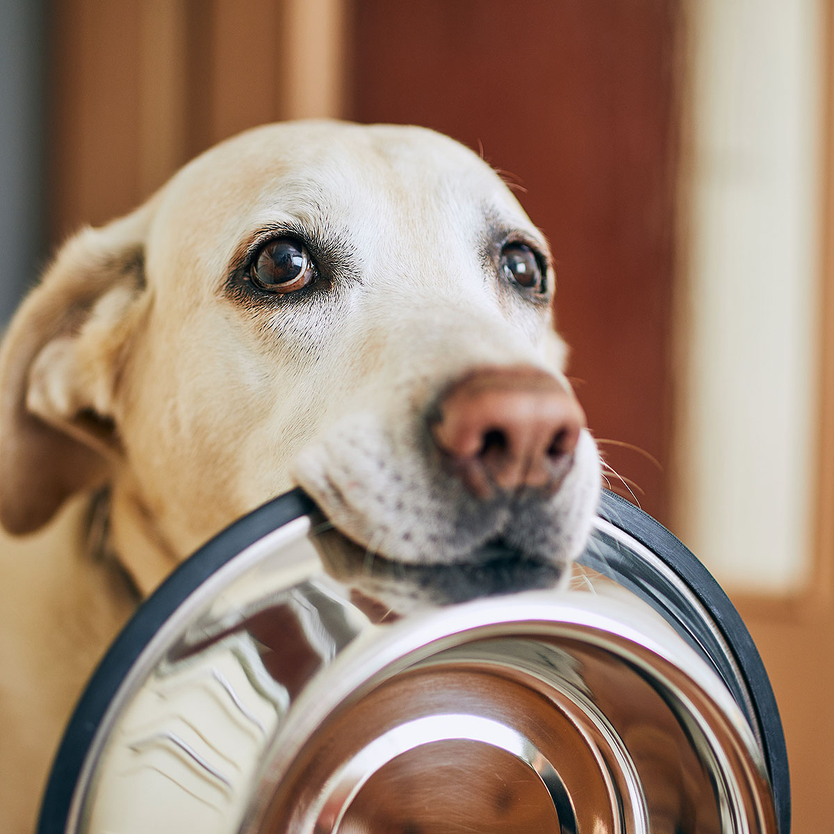 Getreide-im-Hundefutter-Blog