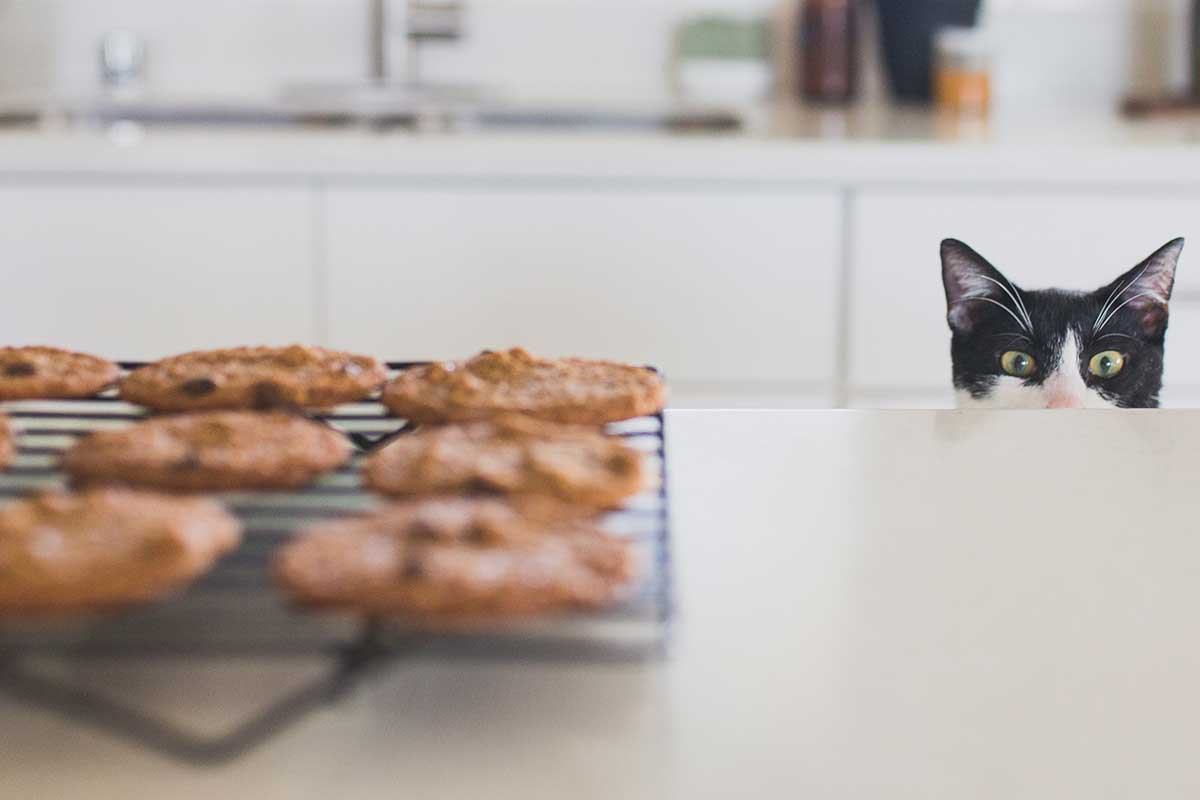 Katzenleckerli-mit-Doerrfleisch