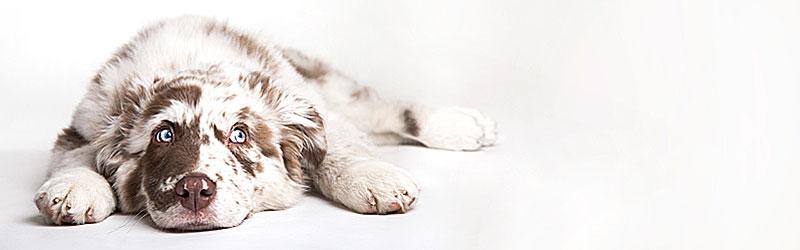 Hundefutter-EbbincsFXhFYh4gXj